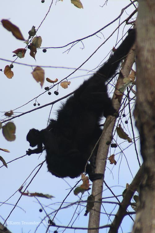 Monkey_0027