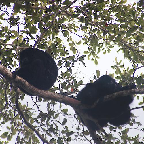 Monkeys_0716