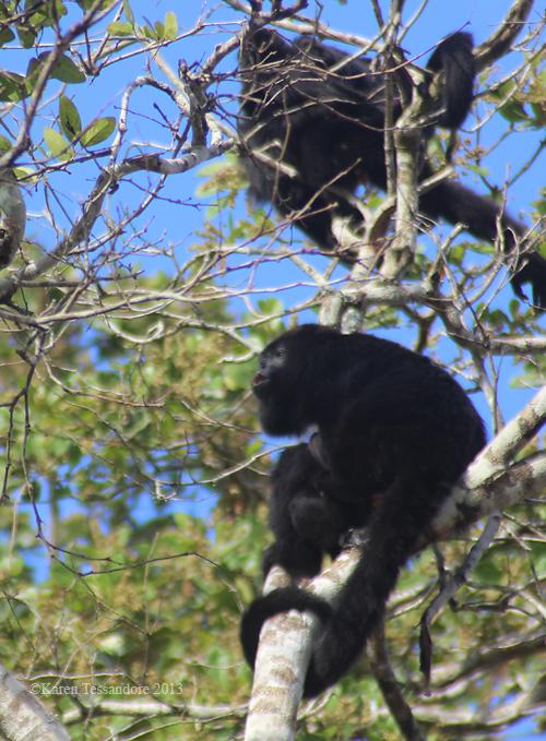 Monkey_0036