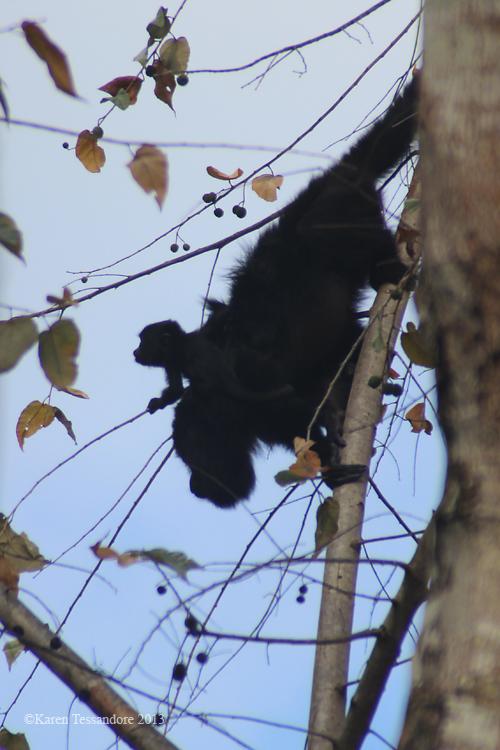 Monkey_0028